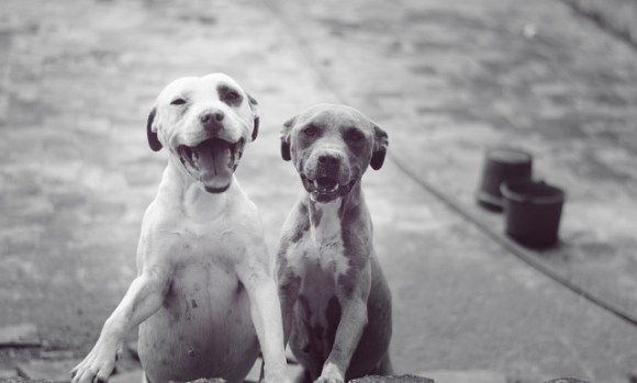 sn_dogs_Ismael Nieto
