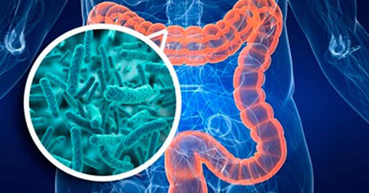 Study: Intestinal Bacteria from Healthy Infants Prevent ...