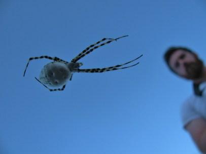 Gavin LOVES arachnids too!