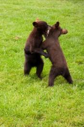 Bear Country USA-13