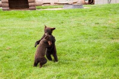 Bear Country USA-14