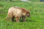 Bear Country USA-2