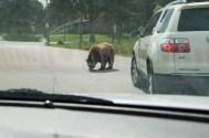 Bear Country USA-3