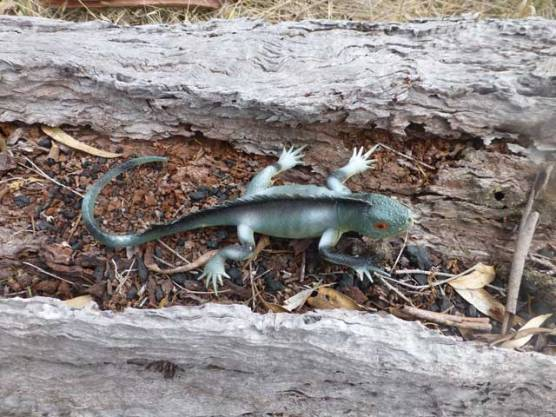 """""""Iguana1"""" part of the """"Animal Facts"""" trail."""