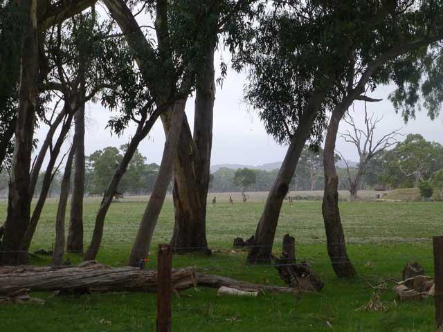 Kangaroos enjoying the environment just like me.