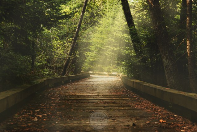 Light rays pierce the moody darkness along the boardwalk at Antrim Creek Natural Area