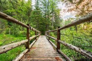 Photo: A cedar footbridge crosses a bog near the Boardman River