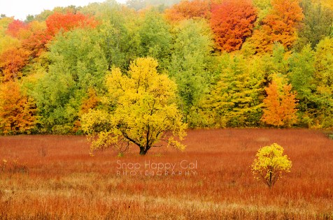 Photo: Two golden trees stand out against a colorful fall backdrop