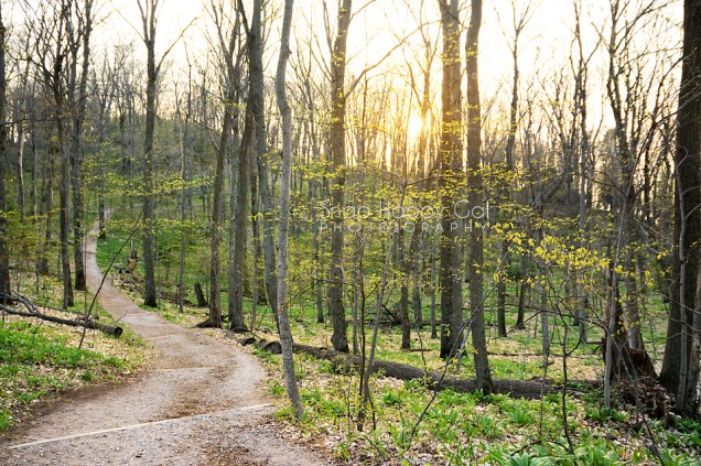 Spring Landscapes  Snap Happy Gal Photography