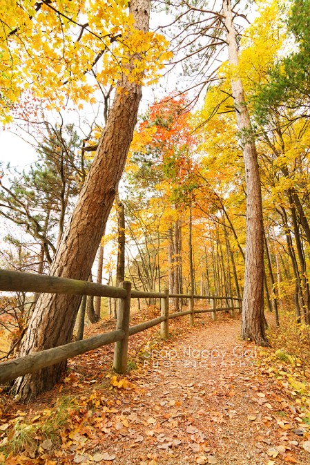 Photo: Log rail, fall trees on the North Country Trail - Buckley, Michigan