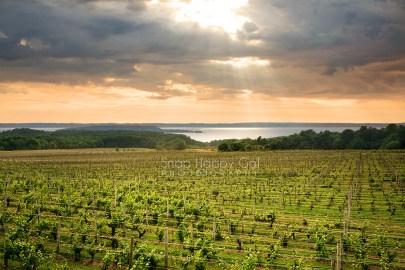 Photo: vineyard above Lake Michigan, lit by sunrays