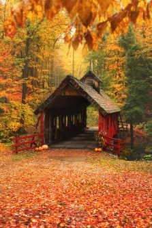 Fall Wallpaper Road Photographer S Favorites Snap Happy Gal Photography