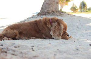Playa Coral: Pet Friendly Beach in Cancun