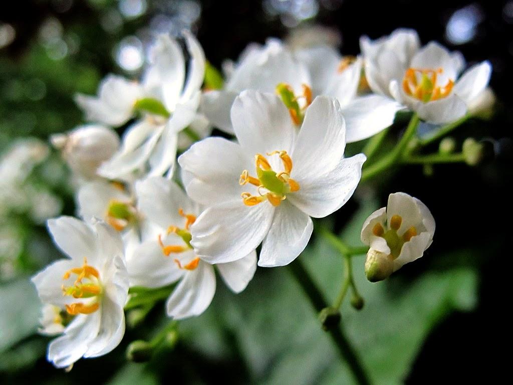 Skeleton Flowers Turn Transparent When It Rains  Snaplantcom