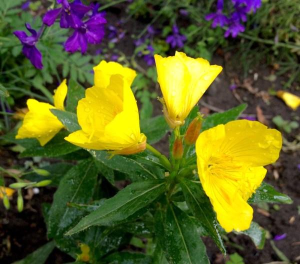 of yellow