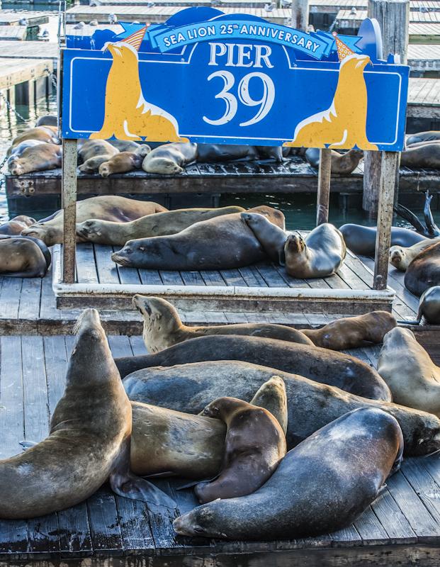 Sea Lions at San Francisco's Pier 39