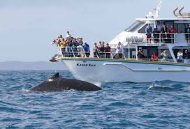 10 percent discount on whale watching