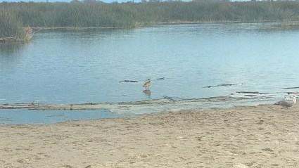 This bird was sneaking around while we were watching the fish.