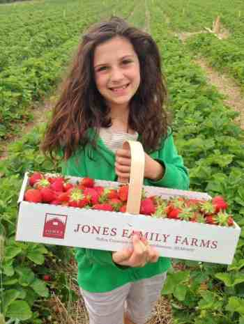 Strawberry Season Information