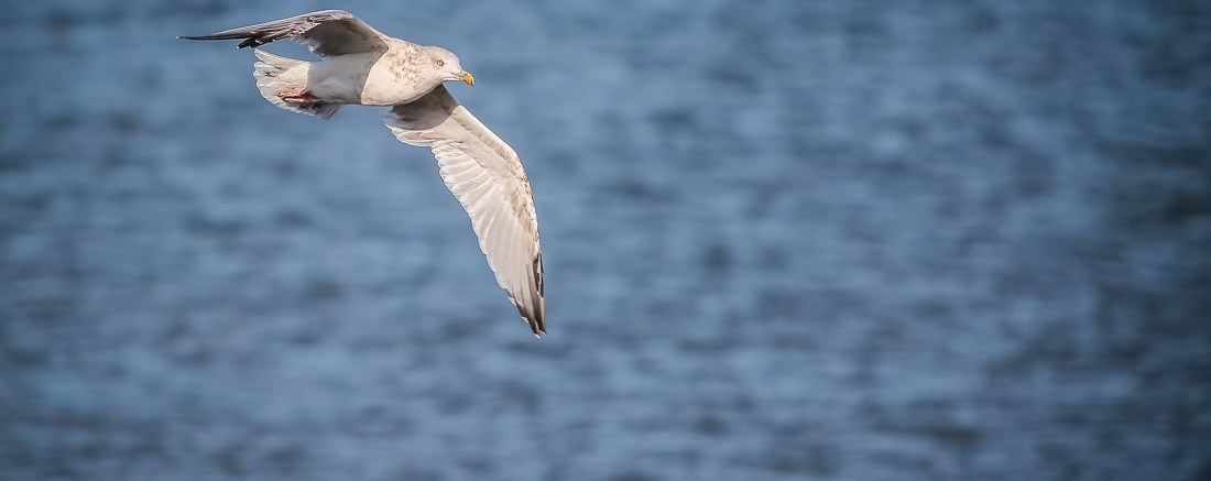 graceful bird photography