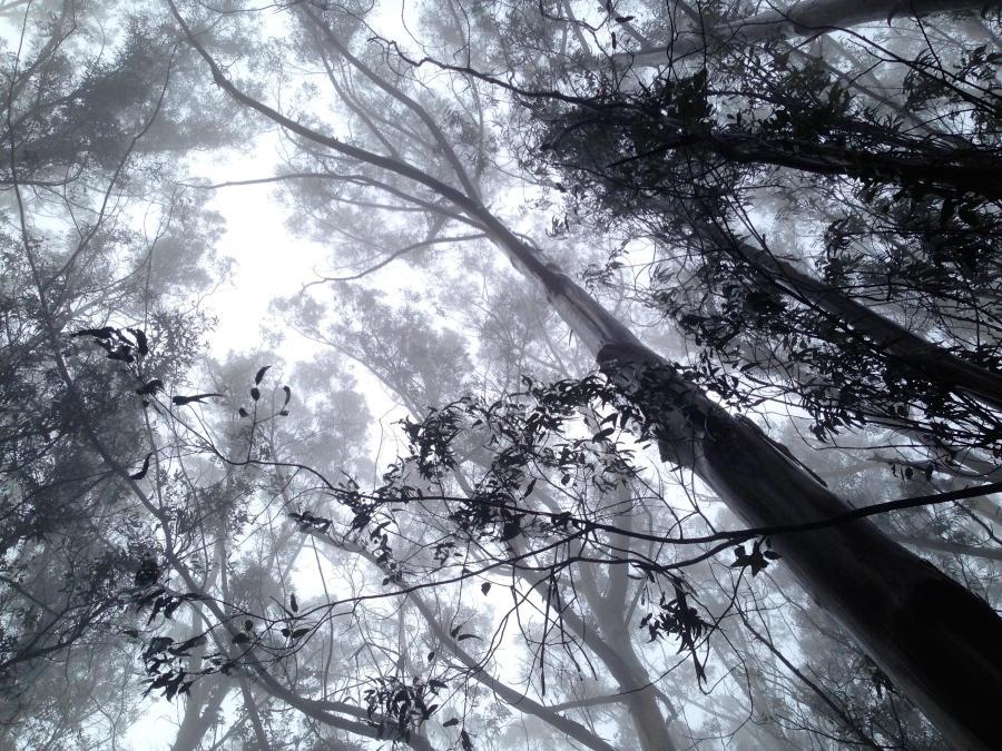 San Pedro County Park, Pacifica