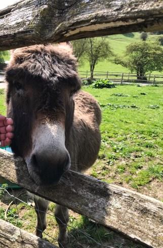 donkey mile oak farm
