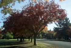 trees7.jpg