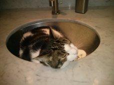 snoopy_sink