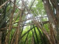 na_pali_hike_bamboo_2.jpg