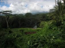 zipline_forest_1