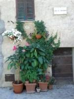 flowers_at_largo_di_fontebranda