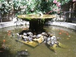 fountain_with_turtles