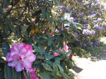 botanical_garden_rhododendrons