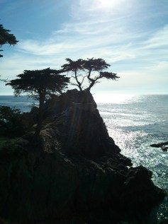 17_mile_drive_lone_cypress_2