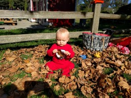 leaves_everett