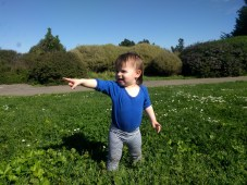 field_pointing