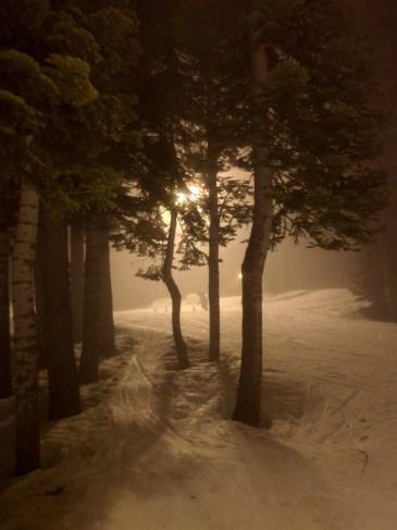 night_trees