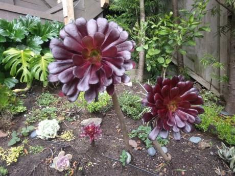 succulent_2
