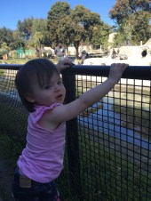 zoo_fence