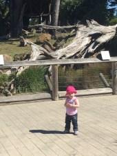 zoo_sunny