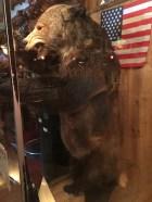 million_dollar_cowboy_bar_bear