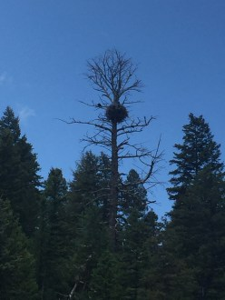 rafting_eagle_nest