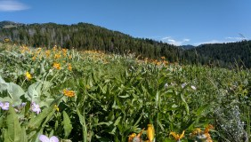 victor_hike_meadow_2