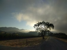 trail_sunrise