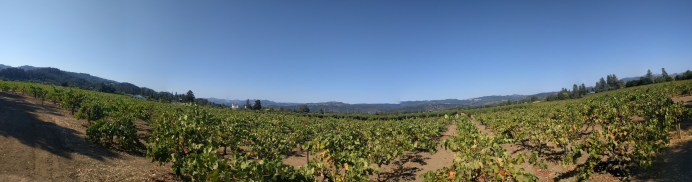 vineyard_pano