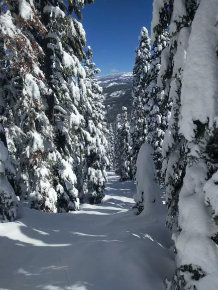 snow_trees_3