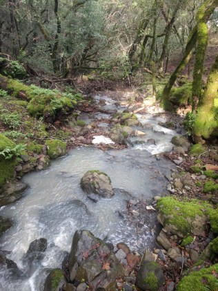 white_oak_stream_2