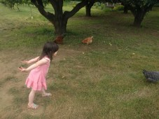 farm_chickens_hawking