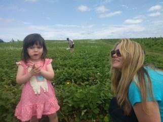 farm_picking_strawberries_2
