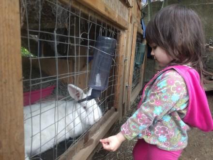neighbors_rabbit